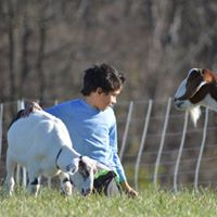 Boy Sitting by a Fence with Goats
